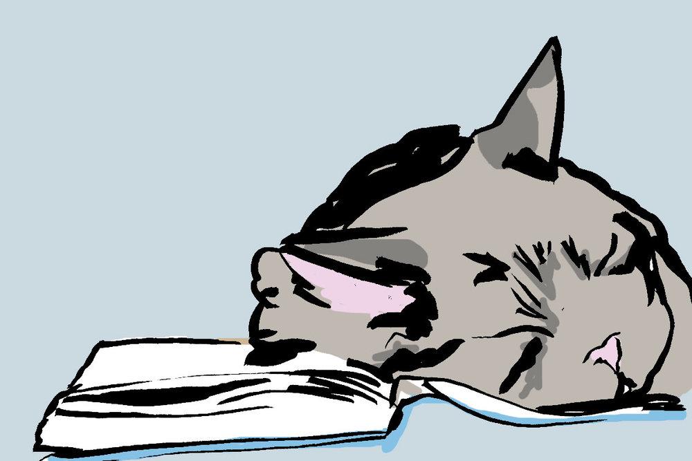catsleeps.jpg