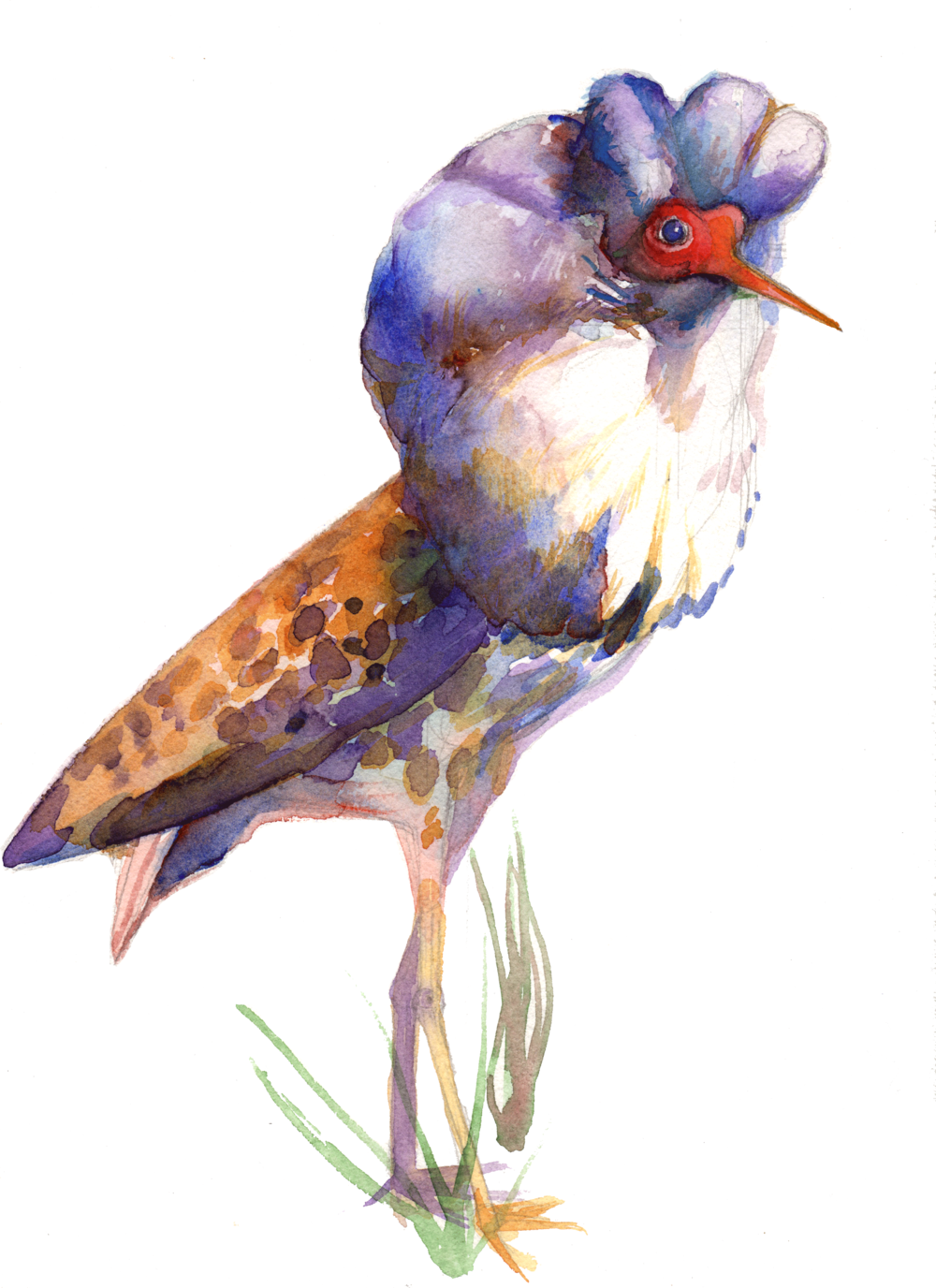 This is a ruff. It is my favorite painting I've done this year (after the one of my best friends before they got married), and it belongs in this post. This bird is so wonderful. He is unapologetic. He is a walking celebration.