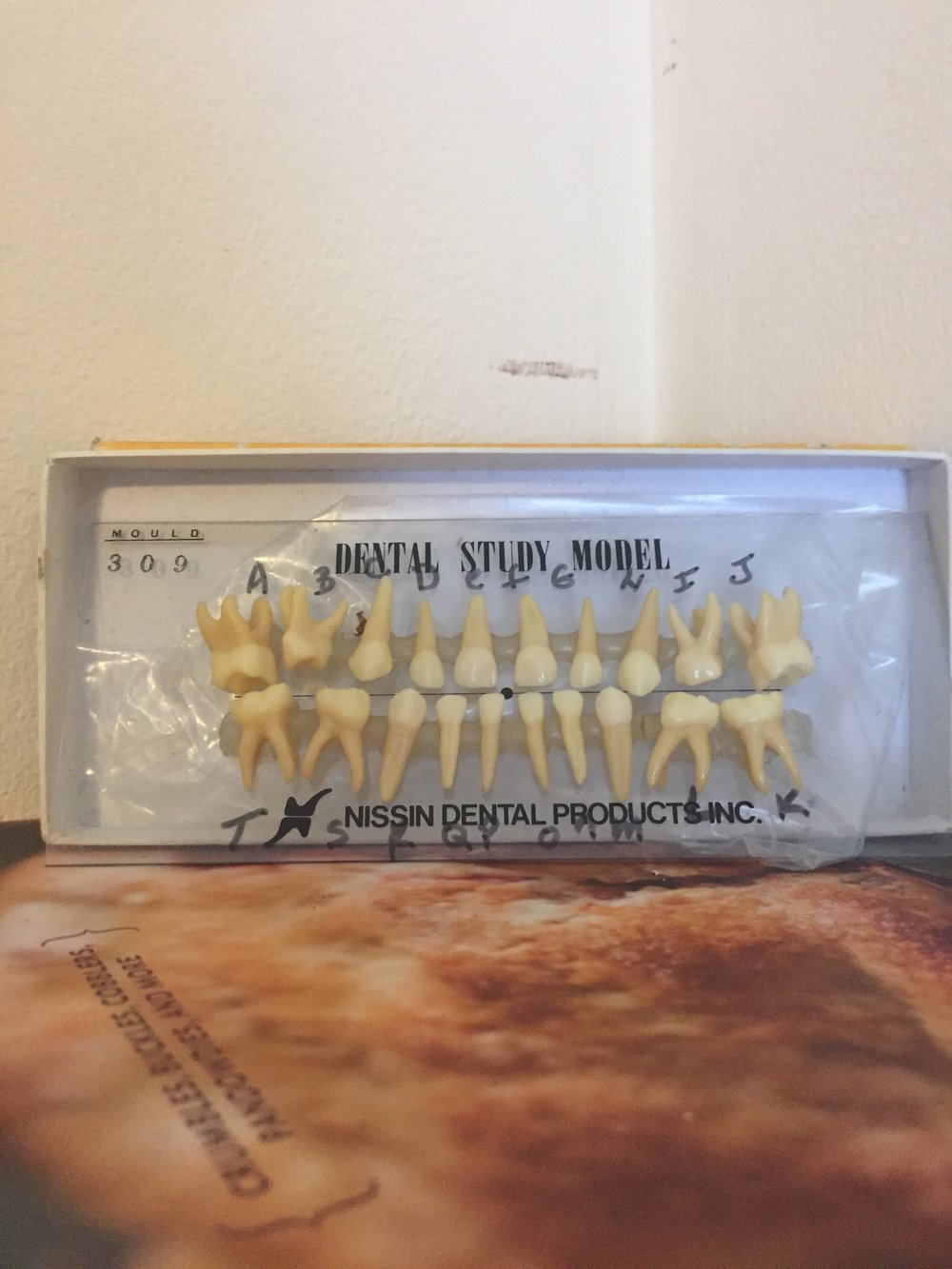 Now the amazing, incredible teeth get to sit on top of a book about pie.