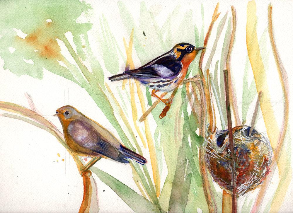 warblers.jpg
