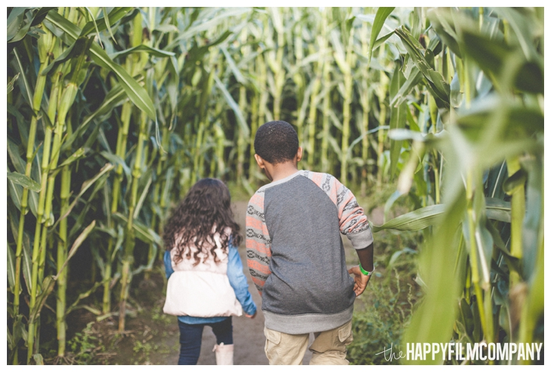 brother and sister running through corn maze  - Seattle Family Holiday Photos - The Happy Film Company - Seattle Family Portraits in Corn Maze
