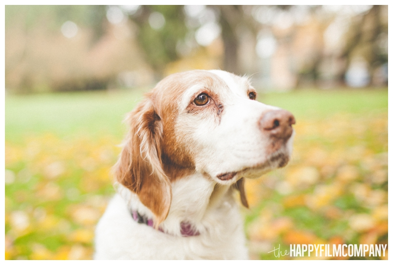 dog portrait white and brown  - the Happy Film COmpany - Greenlake Park Seattle Family HOliday Photos