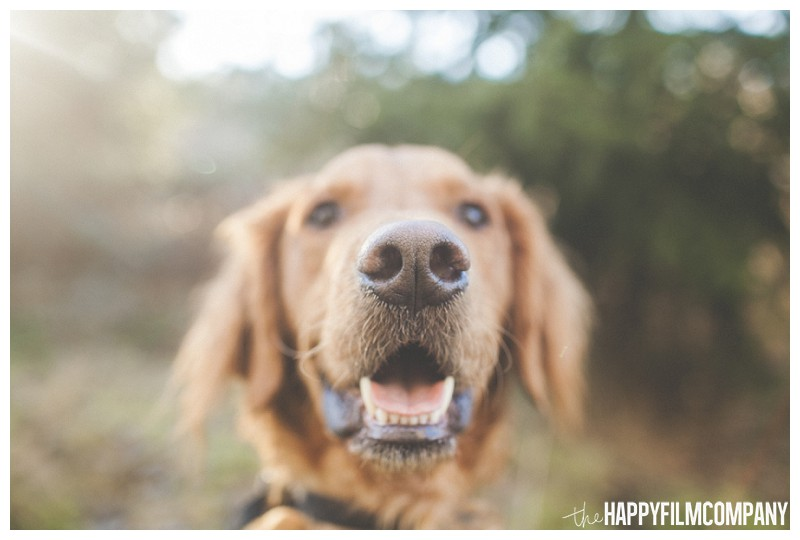 Adorable dog close-up - the Happy Film Company - Why It's a Good Idea to Include Dog in Your Family Portraits