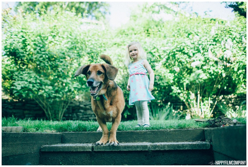 Little girl with her pet dog - the Happy Film Company - Seattle family photos