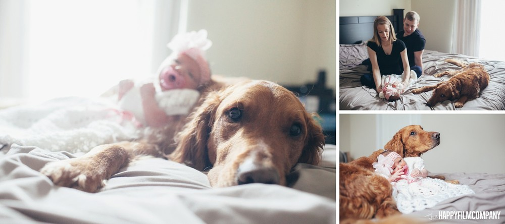Puppy dog on bed cuddling with newborn baby - the Happy Film Company - Seattle Family Photos