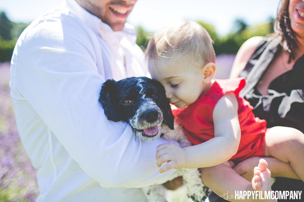 Little baby and cute dog - the Happy Film Company - Seattle Mini Family Photo Shoots