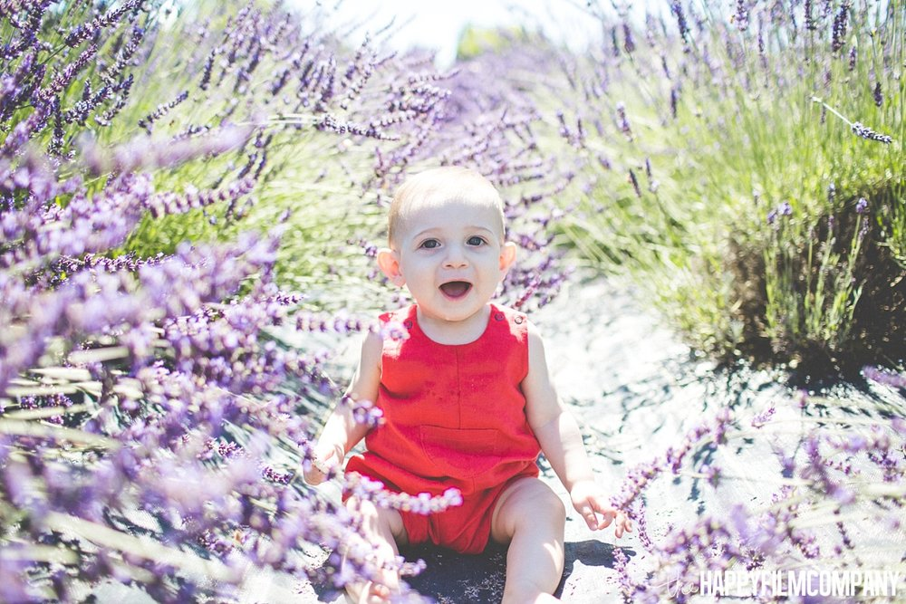 Little Boy sitting in the Lavender fields - the Happy Film Company - Seattle Mini Family Photo Shoots