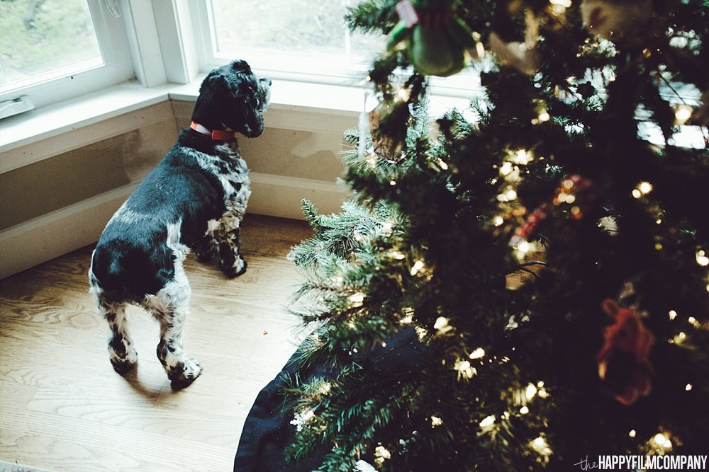 Holiday photos with pets - the Happy Film Company - Seattle Family Photos