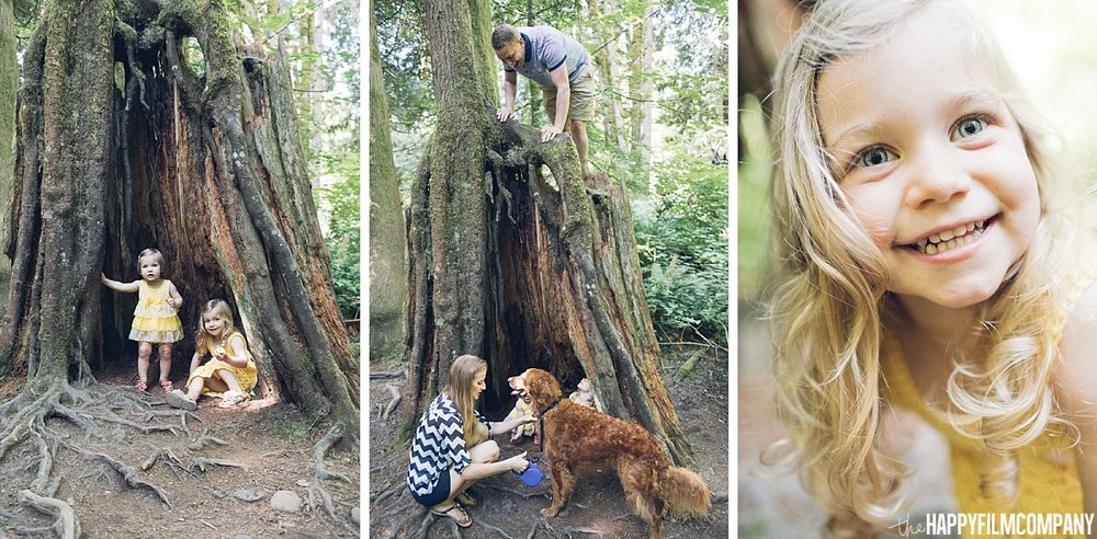 Climbing and playing in an old tree - the Happy Film Company - Seattle family photos