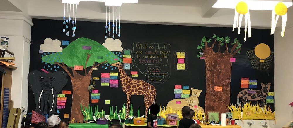 At the end of the year, Ms. Teagle's class had made the Learning Wall into a savanna. The children decided how to create the wall with guidance from Ms. Teagle who outlined the elements which the children colored in. They learned about how nature survived in a changing climate. For instance they learned that the Banyan tree held the water needed in the arid months. The children labeled everything.