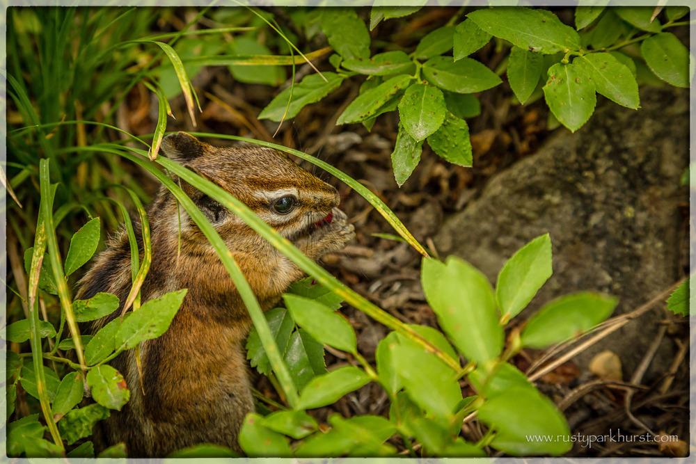 Alberta Falls Wildlife