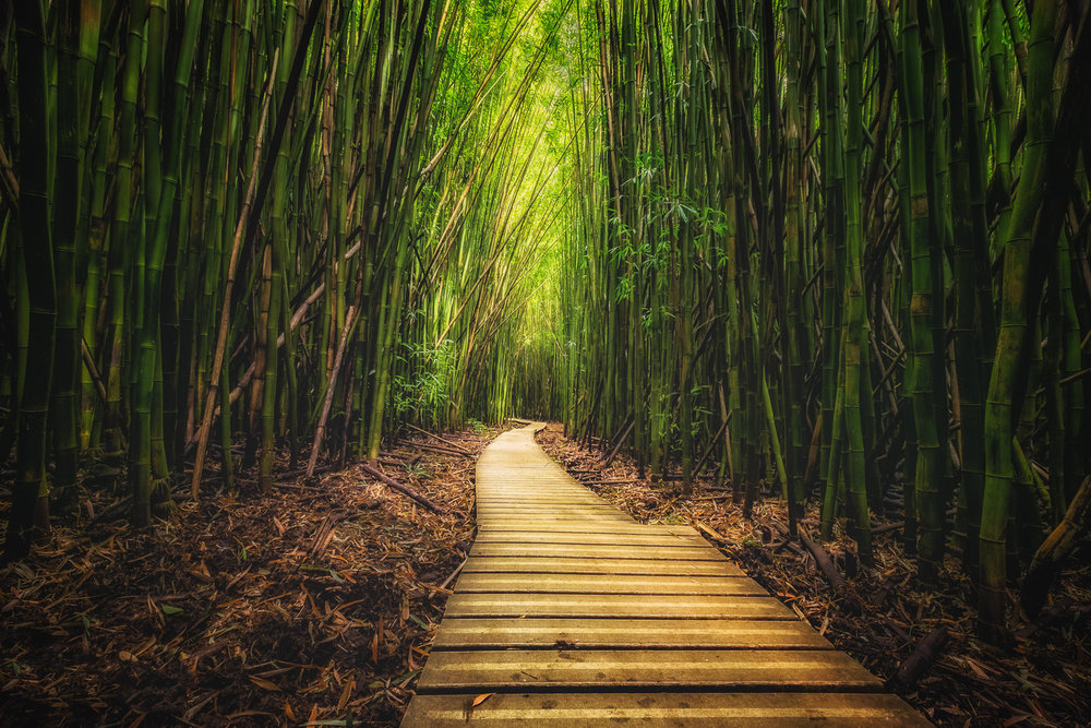 """Bamboo Forest"" - On the Road to Hana, while in Maui. Captured January 6, 2017."