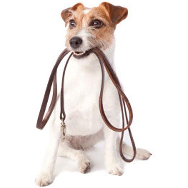 dog-walking-dc-6071.jpg