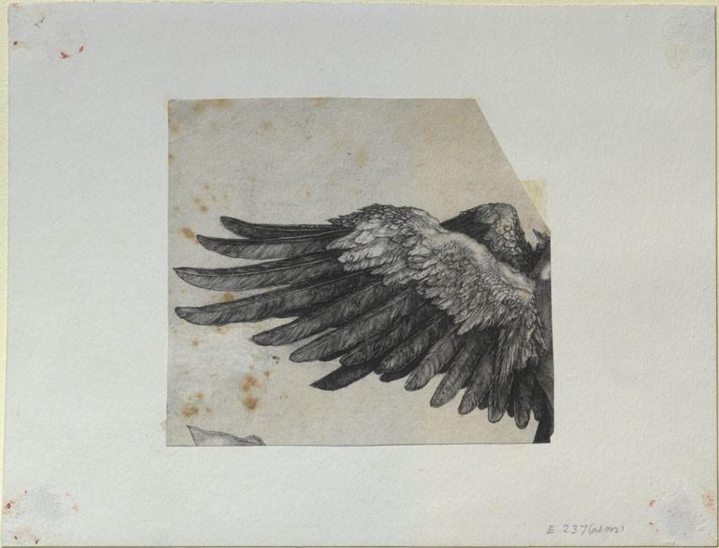 workman: manybirdsfromthetreeoflife: Albrecht Dürer, Nemesis' wing