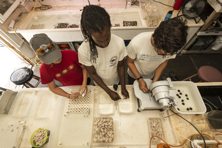Microfragmenting coral is a team effort. While one person cuts the coral, another cleans the coral with a turkey baster, and the final person glues the newly cut fragment to a new plug.