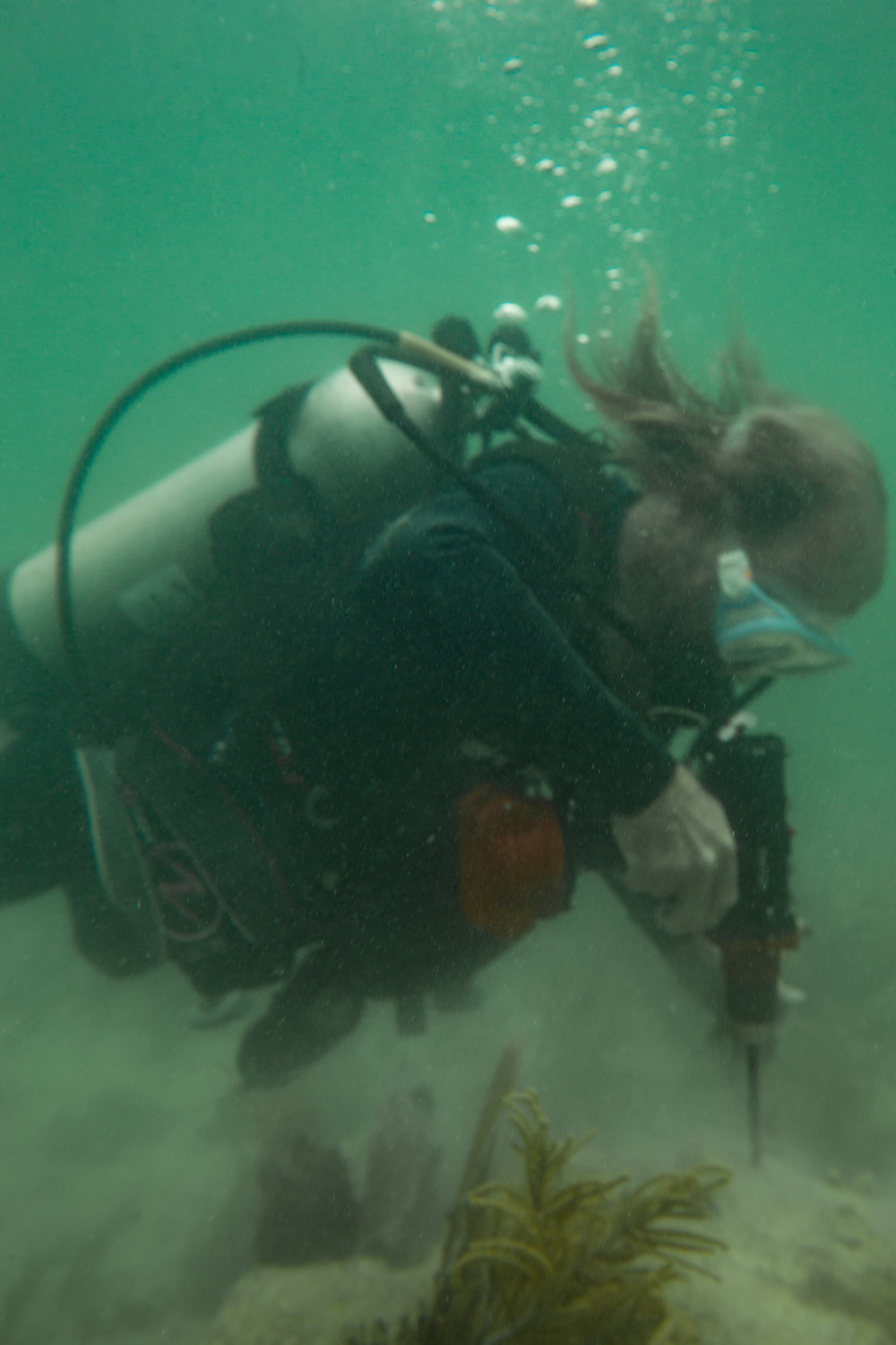 Dr. Dave Vaughan uses an underwater drill to make holes for cementing the coral fragments in place.