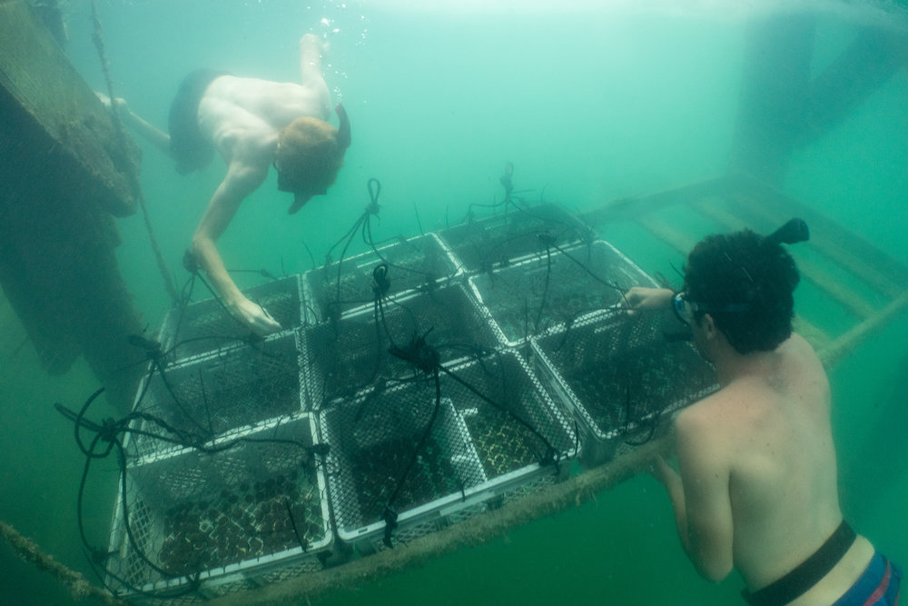 Each basket can hold a few hundred coral fragments.