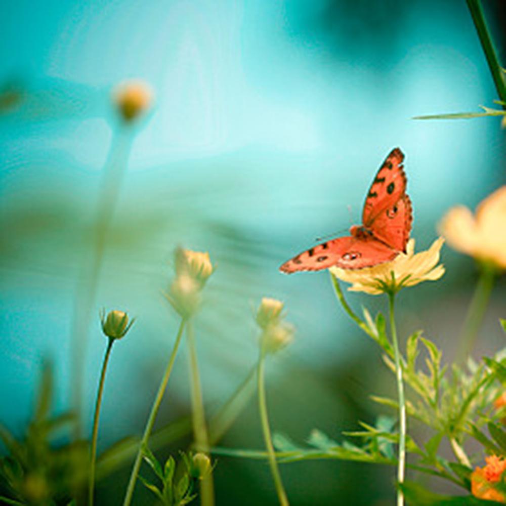 Orange Butterfly.jpg