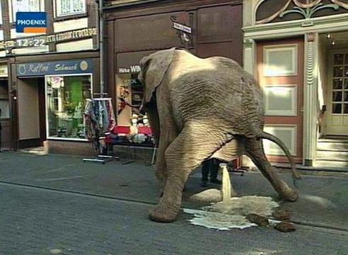Als olifanten konden vliegen dan zou het een grote smeerboel worden!