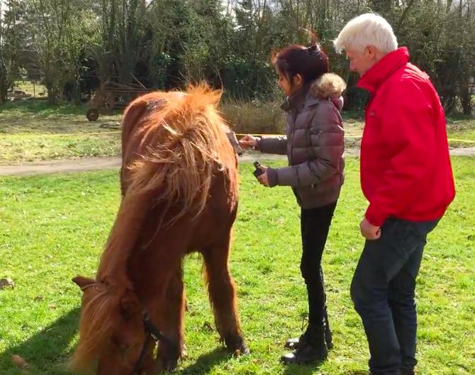 www.isapower.nl paardencoaching bij eetstoornissen