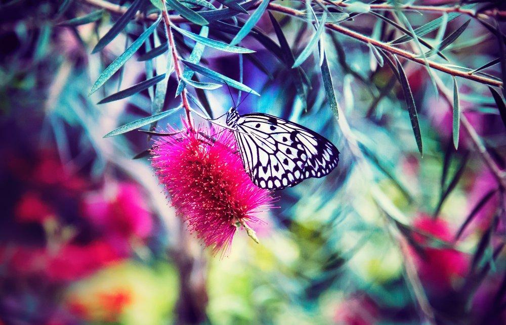 Fotografie: Melissa Chabot, unsplash.com