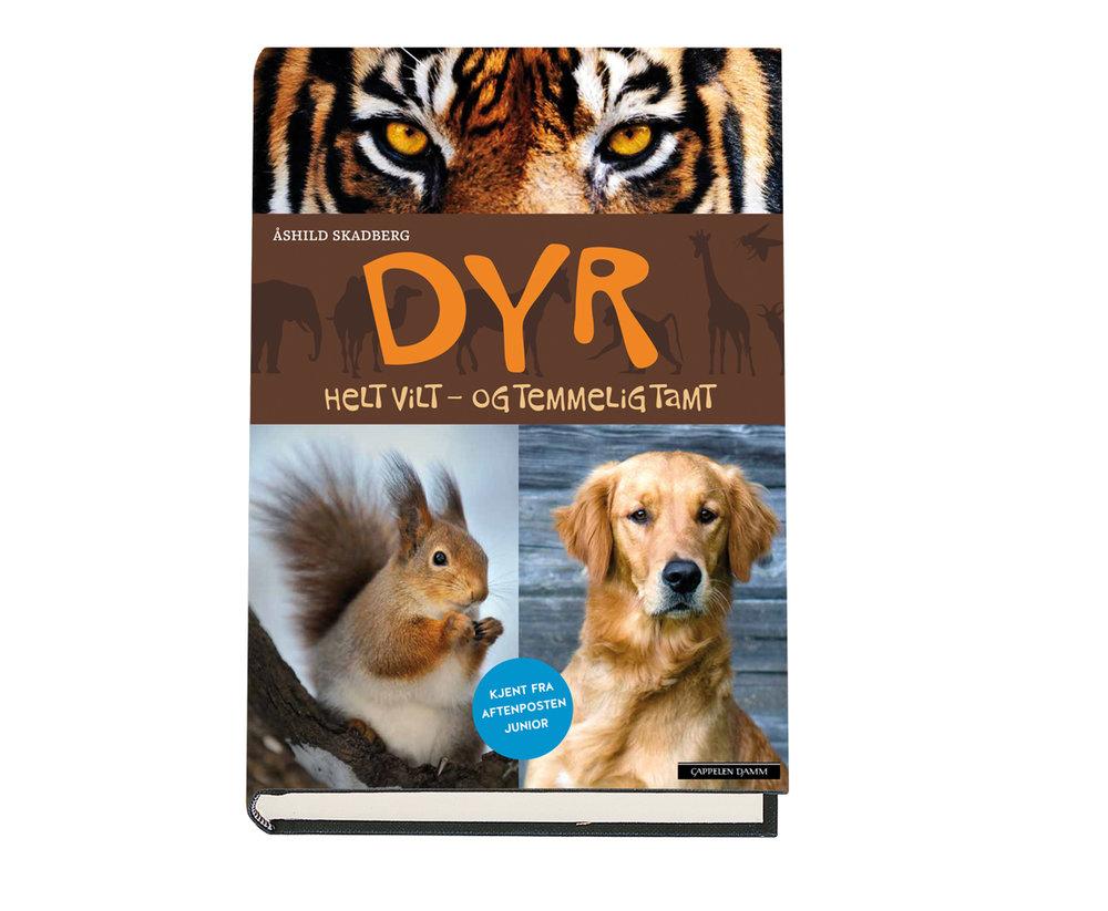 DYRweb.jpg