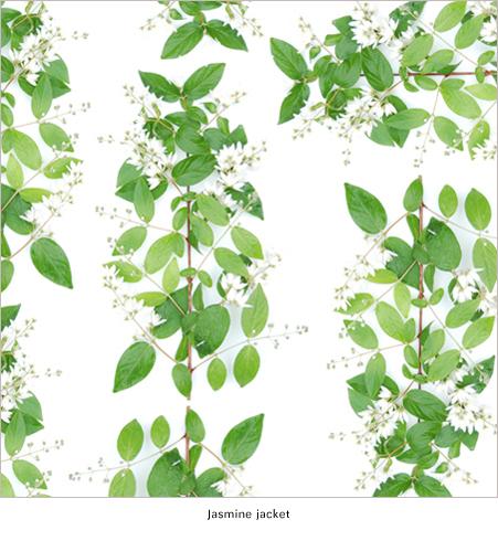 Herbarium_Spring_Jasmine_print_design_by_Thomas_Voorn.jpg