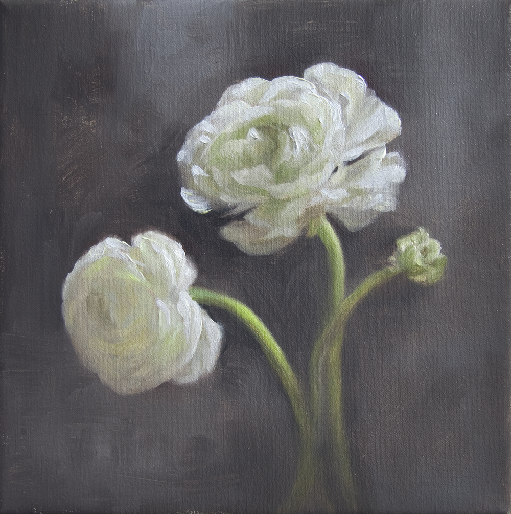 "Winter White Ranunculus   8"" x 8""    Oil on Linen   SOLD"