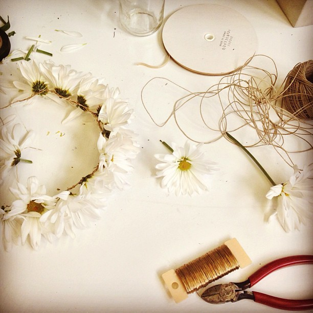 daisies_Amy_Lind