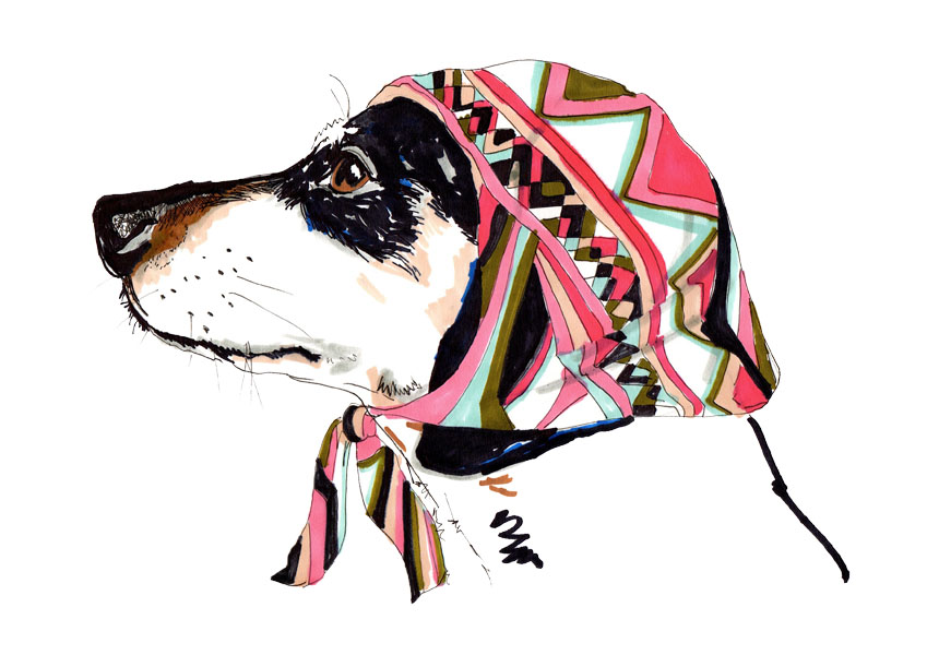Pooch In Pucci.jpg