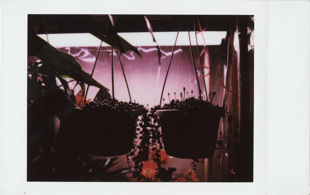 FlowerStore_800DPI 2.jpg