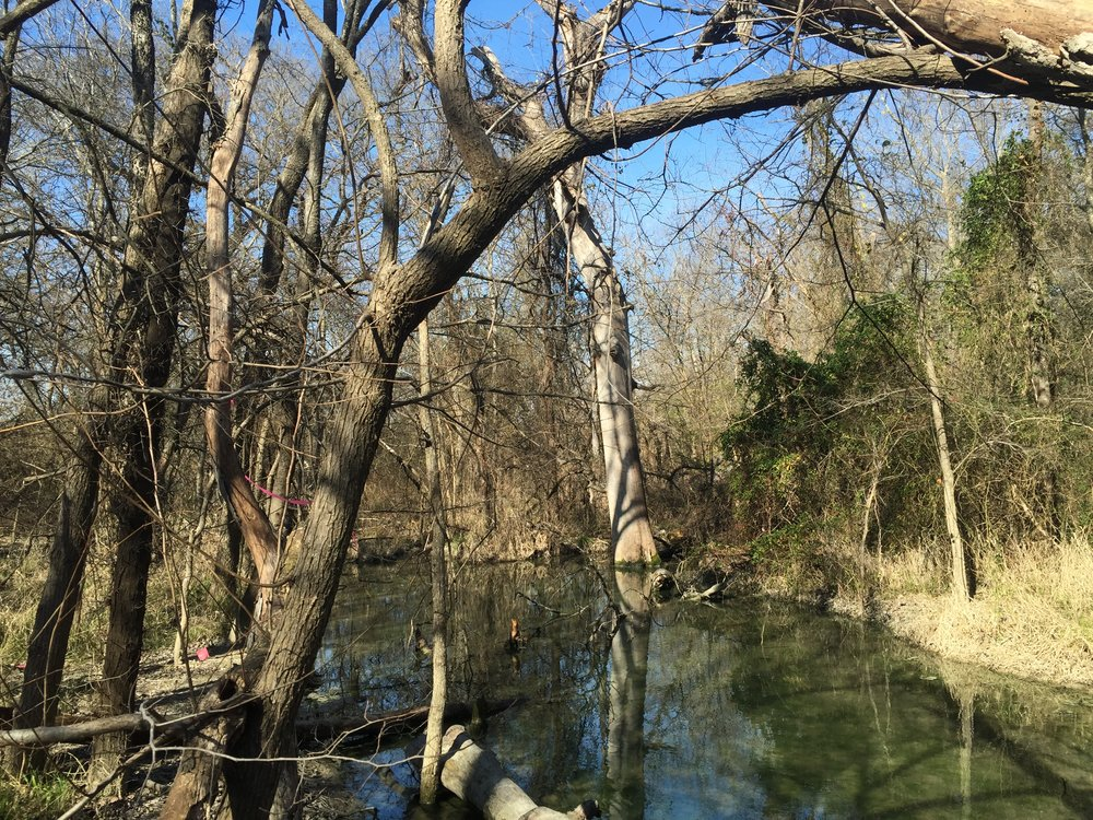 Protected wetland area at Bonny Wenk Park in McKinney, Texas.