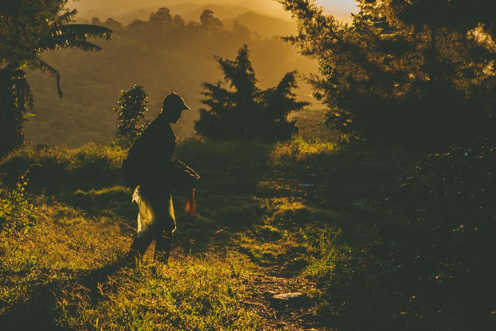 www.bohemianredimages.com