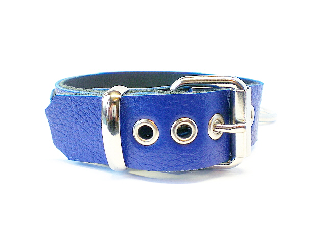 standard buckle - royal blue