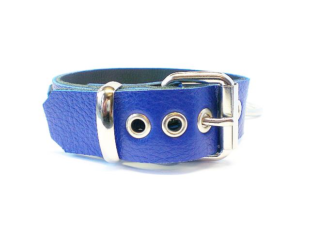 standard buckle - royal blue