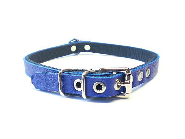 standard buckle in royal blue