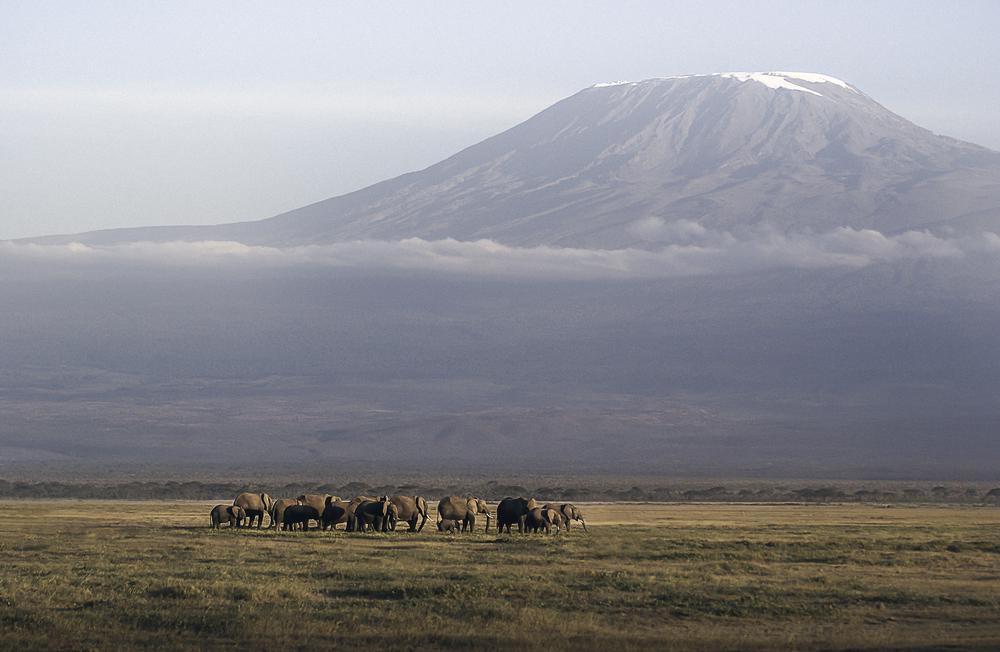Amboseli Elephants | 2008
