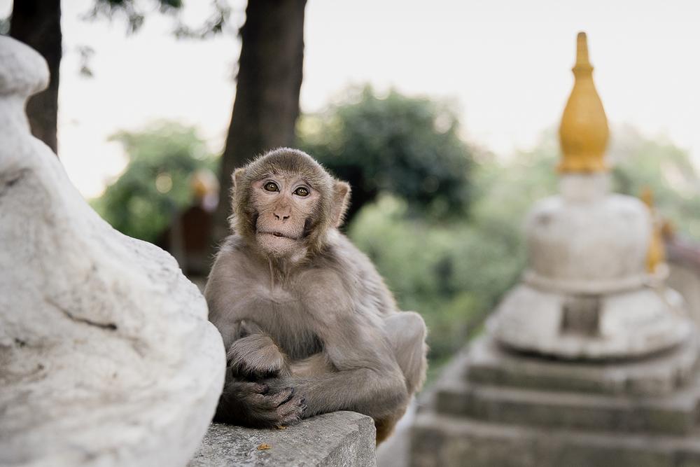 Monkey Temple | 2015