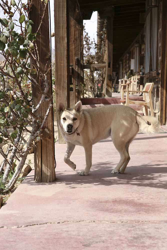 hotel dog.jpg