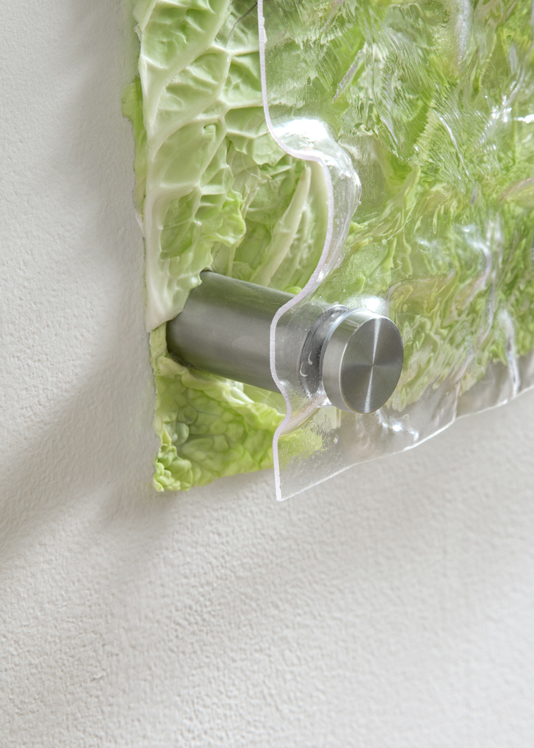 Carbon, Nitrogen, Oxygen, Water (Detail) 2013 PETF plastic, cabbage, steel standoffs 19 x 22 x 2 inches