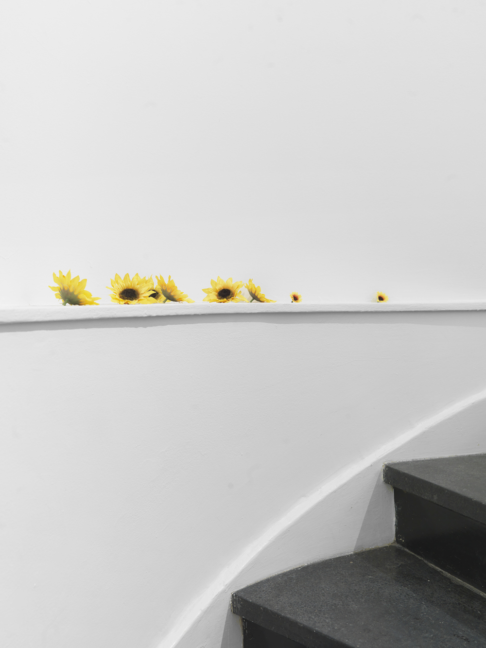 9,11 (detail) 2014 Fake sunflowers and sticker Dimensions variable