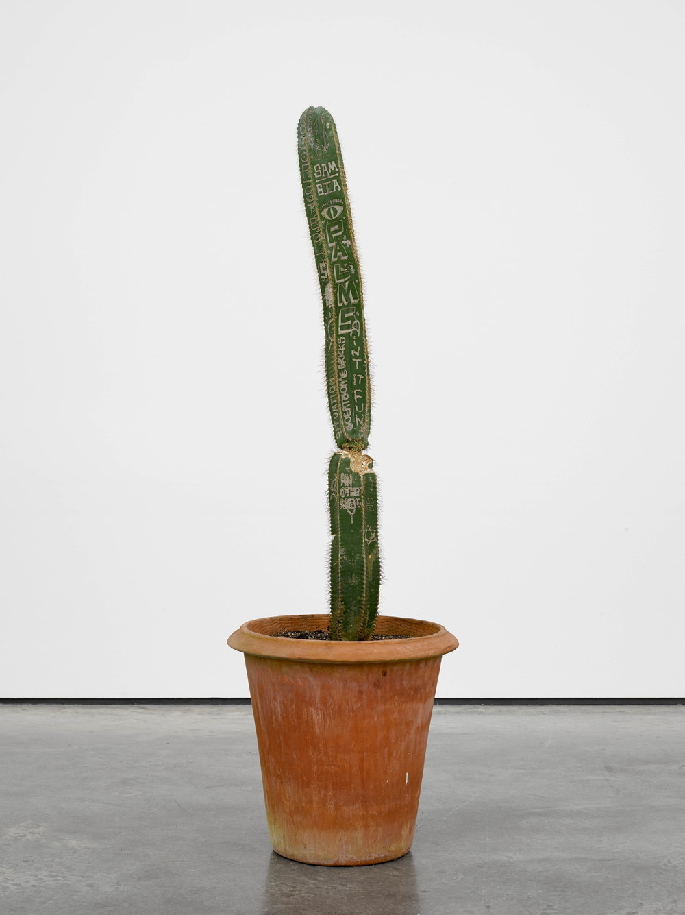 Ain't It Fun 2014 Cactus Dimensions variable