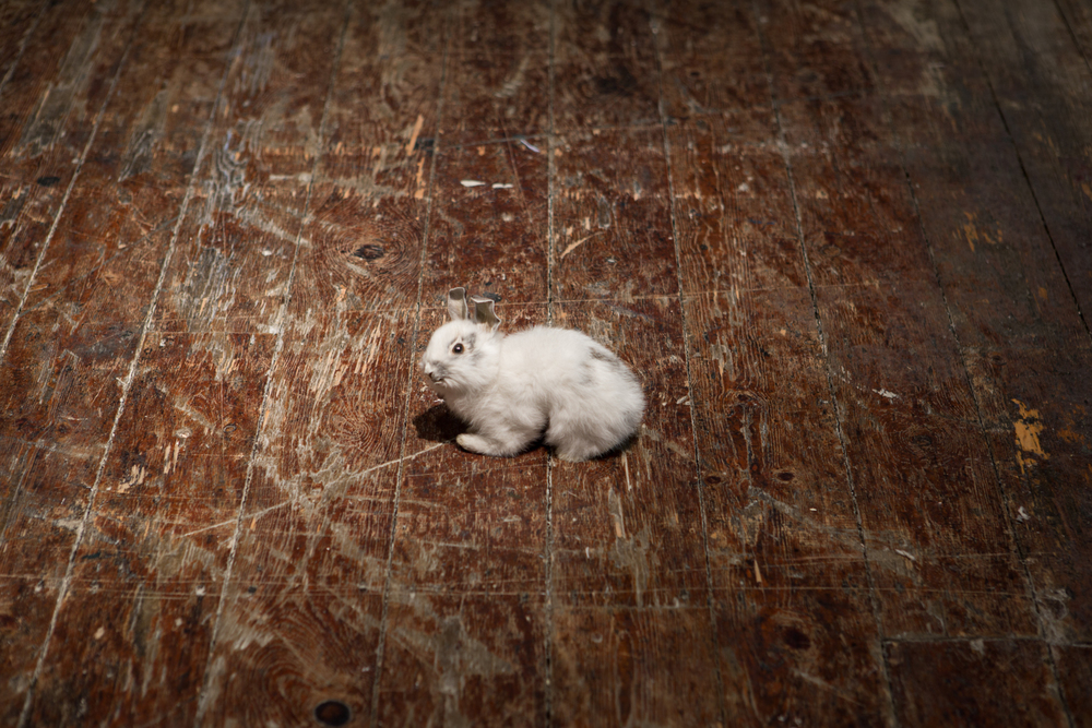 Alex Ito  Endless Sadness (valued fours) , 2014 Taxidermy rabbit 5 x 7 x 4 inches