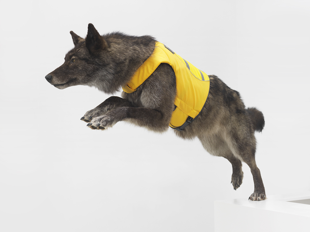 Spirit Guide, 2015 Wolf and life jacket 45 x 16 x 70 inches