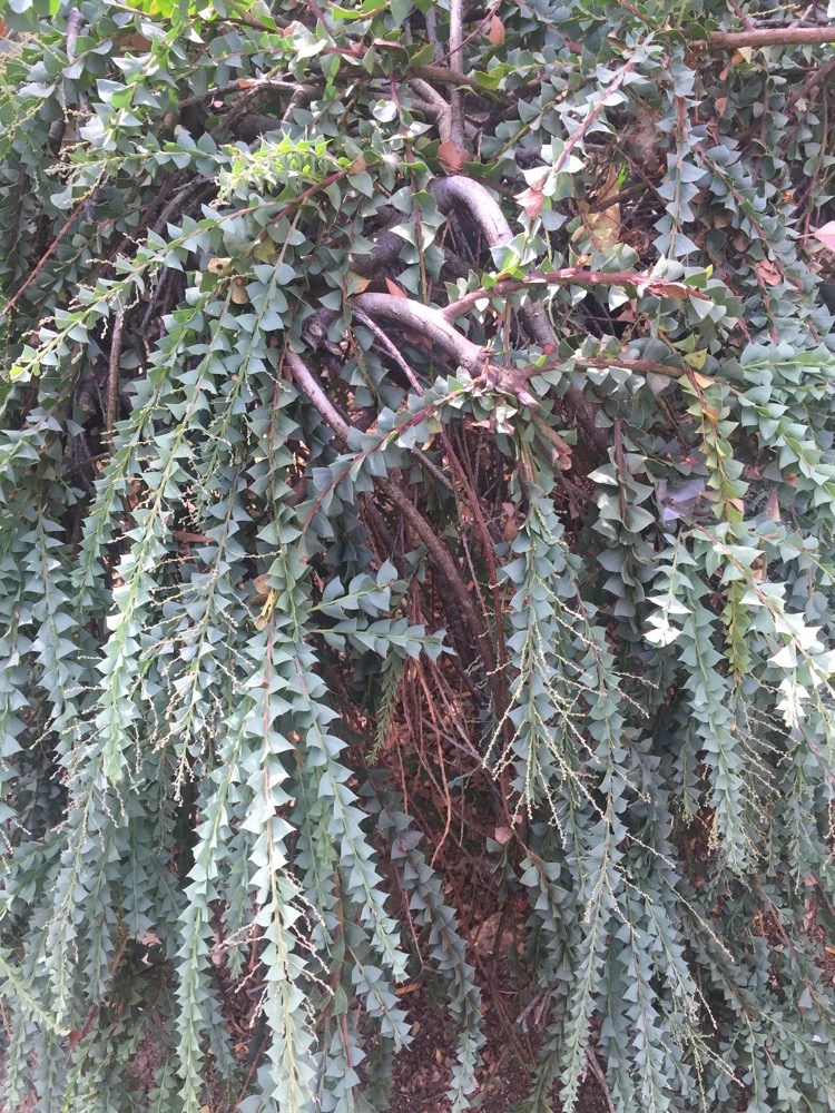 arboretum-arterra-03.JPG