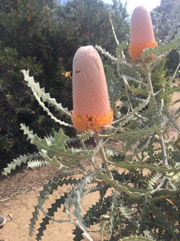 arboretum-arterra-06.JPG