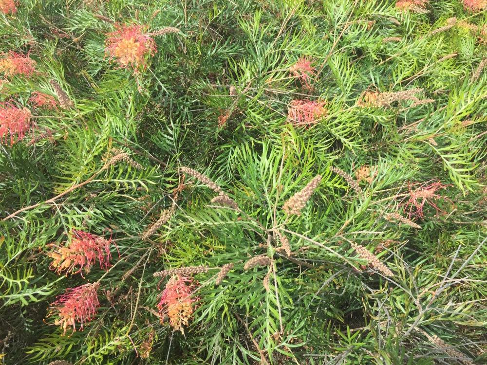arboretum-arterra-11.JPG