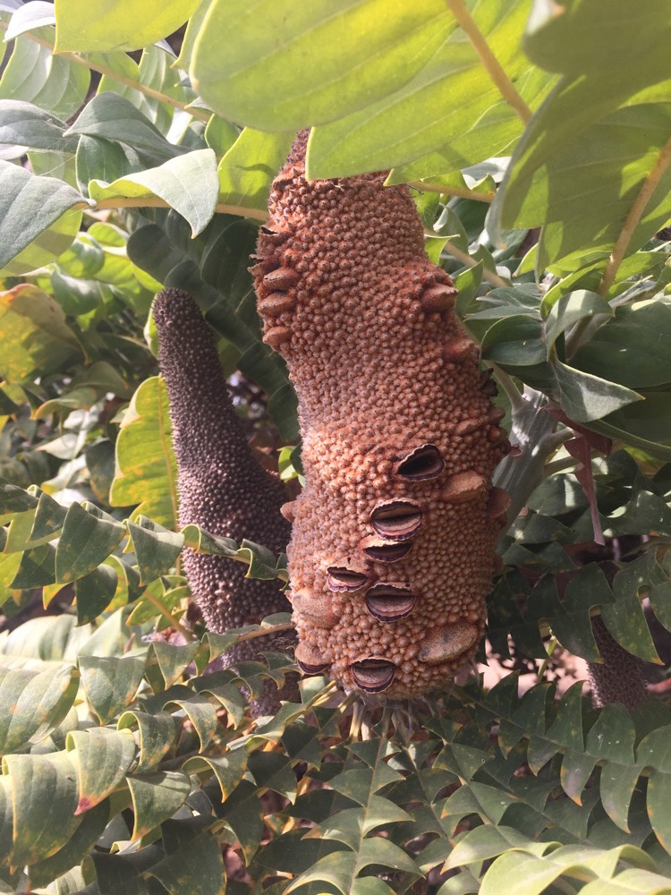 arboretum-arterra-13.JPG