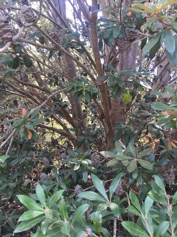 arboretum-arterra-16.JPG