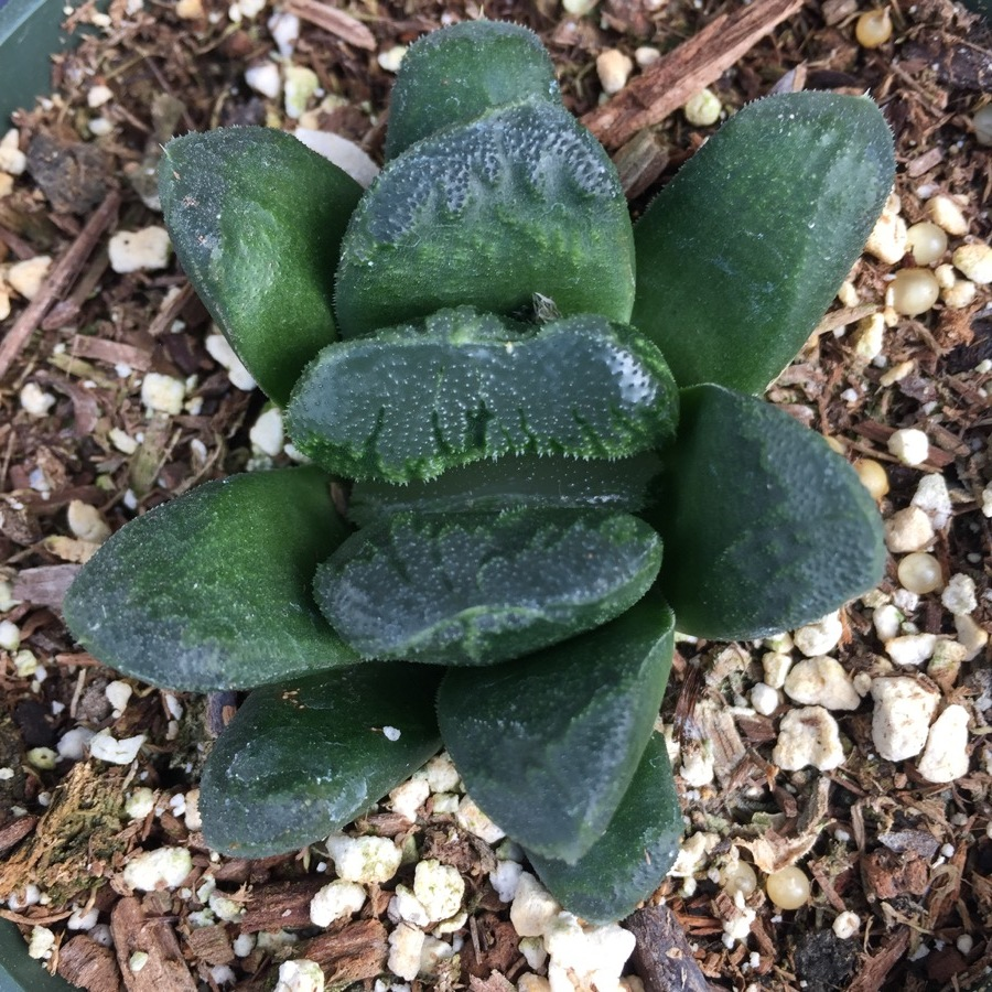 succulents-1.JPG
